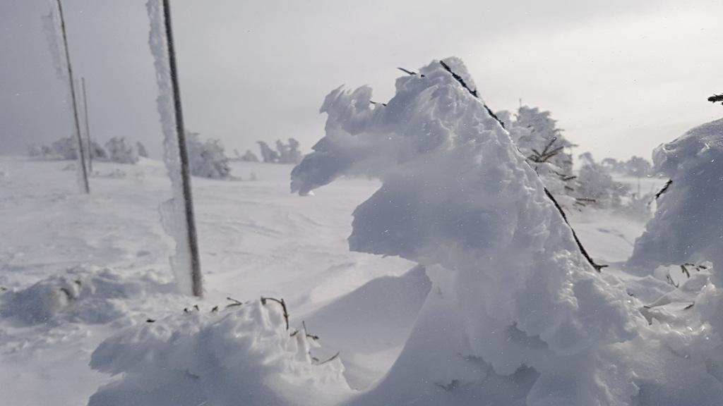 wielki-szyszak-sniezna-pustynia