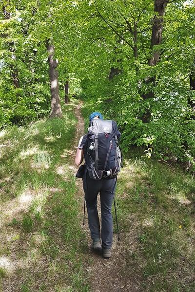 GSS dzień 4 ścieżka pośród drzew