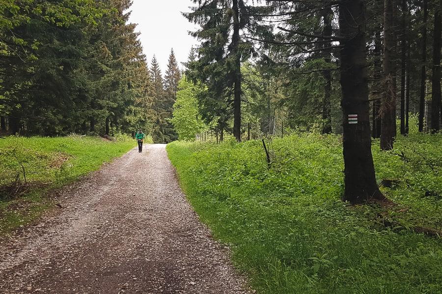 Pasmo Krowiarki i świerkowy las